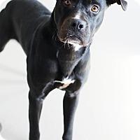Adopt A Pet :: Frankie *Petsmart GB* - Appleton, WI