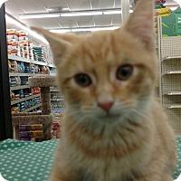 Adopt A Pet :: Tangy - Warren, OH