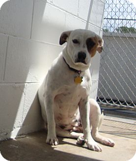 Hound (Unknown Type) Mix Dog for adoption in Winter Haven, Florida - Lilly