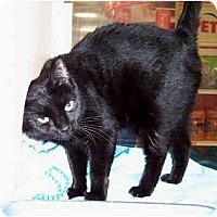 Adopt A Pet :: Midnight - Jersey City, NJ