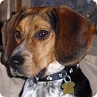 Adopt A Pet :: McCoy - Novi, MI