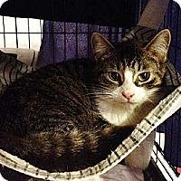 Adopt A Pet :: Kelby - Byron Center, MI