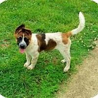 Adopt A Pet :: Rex - Brattleboro, VT