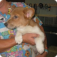Adopt A Pet :: Stark - Inola, OK