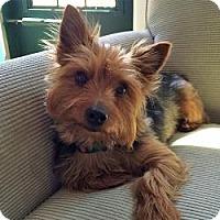 Adopt A Pet :: Chelsea - Carmine, TX