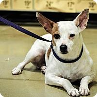Adopt A Pet :: Jessie - Gainesville, FL