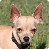 Adopt A Pet :: Cooper - Edmonton, AB