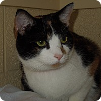Adopt A Pet :: Carrie - Medina, OH