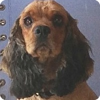 Adopt A Pet :: Cher - Santa Barbara, CA