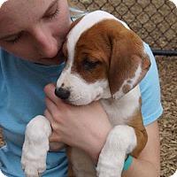 Adopt A Pet :: Marcie - Sudbury, MA