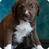 Adopt A Pet :: Tracy - Waldorf, MD