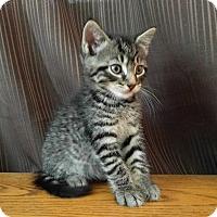 Adopt A Pet :: Thor - Sparta, NJ