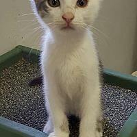 Adopt A Pet :: DERRICK! - Owenboro, KY