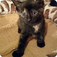 Adopt A Pet :: Baby Taco - Harrisburg, PA