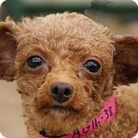 Adopt A Pet :: Ursa - Colorado Springs, CO