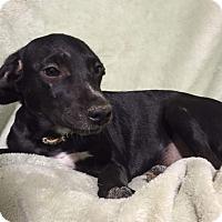 Adopt A Pet :: Linx - Metairie, LA