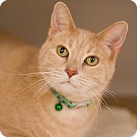 Adopt A Pet :: Ned Nederlander - Grayslake, IL