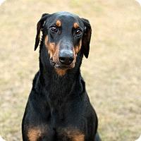 Adopt A Pet :: Deuce - Groton, MA