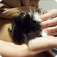 Adopt A Pet :: Gerard - Santa Rosa, CA