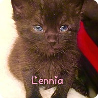 Adopt A Pet :: Lennia  (Bottle Baby!) - York, PA