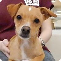 Adopt A Pet :: Winston - Studio City, CA