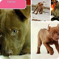 Adopt A Pet :: Caitlyn - Clear Lake, IA
