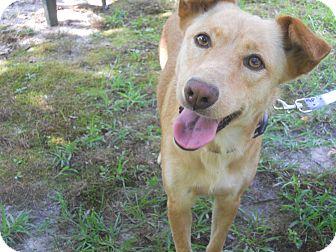 Golden Retriever/German Shepherd Dog Mix Dog for adoption in Conyers, Georgia - Roxy