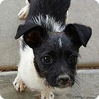 Adopt A Pet :: Owen - Phoenix, AZ