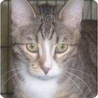 Adopt A Pet :: Tyra - Andover, KS