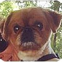 Adopt A Pet :: Rudee-VA - Mays Landing, NJ