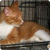 Adopt A Pet :: Logan - Cocoa, FL