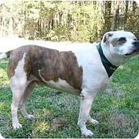 Adopt A Pet :: Rufus - Mocksville, NC