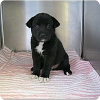 Adopt A Pet :: Bark - Alexandria, VA