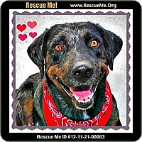 Adopt A Pet :: Wagger - Scottsdale, AZ