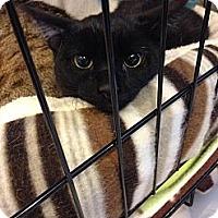 Adopt A Pet :: Bruno Mars - Lombard, IL