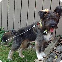 Adopt A Pet :: Benji - Hamilton, ON