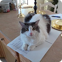 Adopt A Pet :: Robbie - Turnersville, NJ