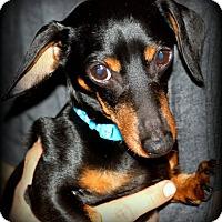 Adopt A Pet :: Oscar - Warsaw, IN