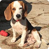 Adopt A Pet :: Austin - Cranford, NJ
