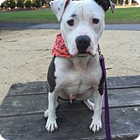Adopt A Pet :: Forrest - Richmond, CA