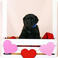 Adopt A Pet :: Jessop - Waldorf, MD