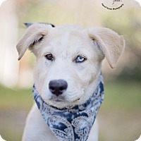 Adopt A Pet :: Lucas - Kingwood, TX