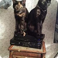 Adopt A Pet :: Cali & Majin - Acushnet, MA