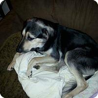 Adopt A Pet :: Baby - Harrison, AR