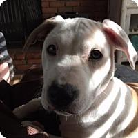 Adopt A Pet :: Neva-Adopted! - Detroit, MI