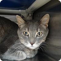Adopt A Pet :: Grazey - Elyria, OH