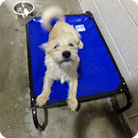 Terrier (Unknown Type, Medium) Mix Dog for adoption in Osceola, Arkansas - BOBBY