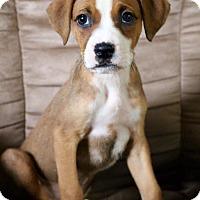 Adopt A Pet :: Delta - Toledo, OH