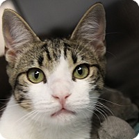 Adopt A Pet :: Budvar - Sarasota, FL