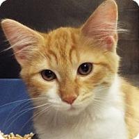 Adopt A Pet :: Velma - Grants Pass, OR